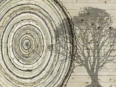 安信地板不上当科普:装修朋友必须了解的木材基本知识