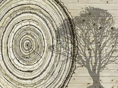 自然之痕生命之印,从一片地板洞悉安信的自然美学